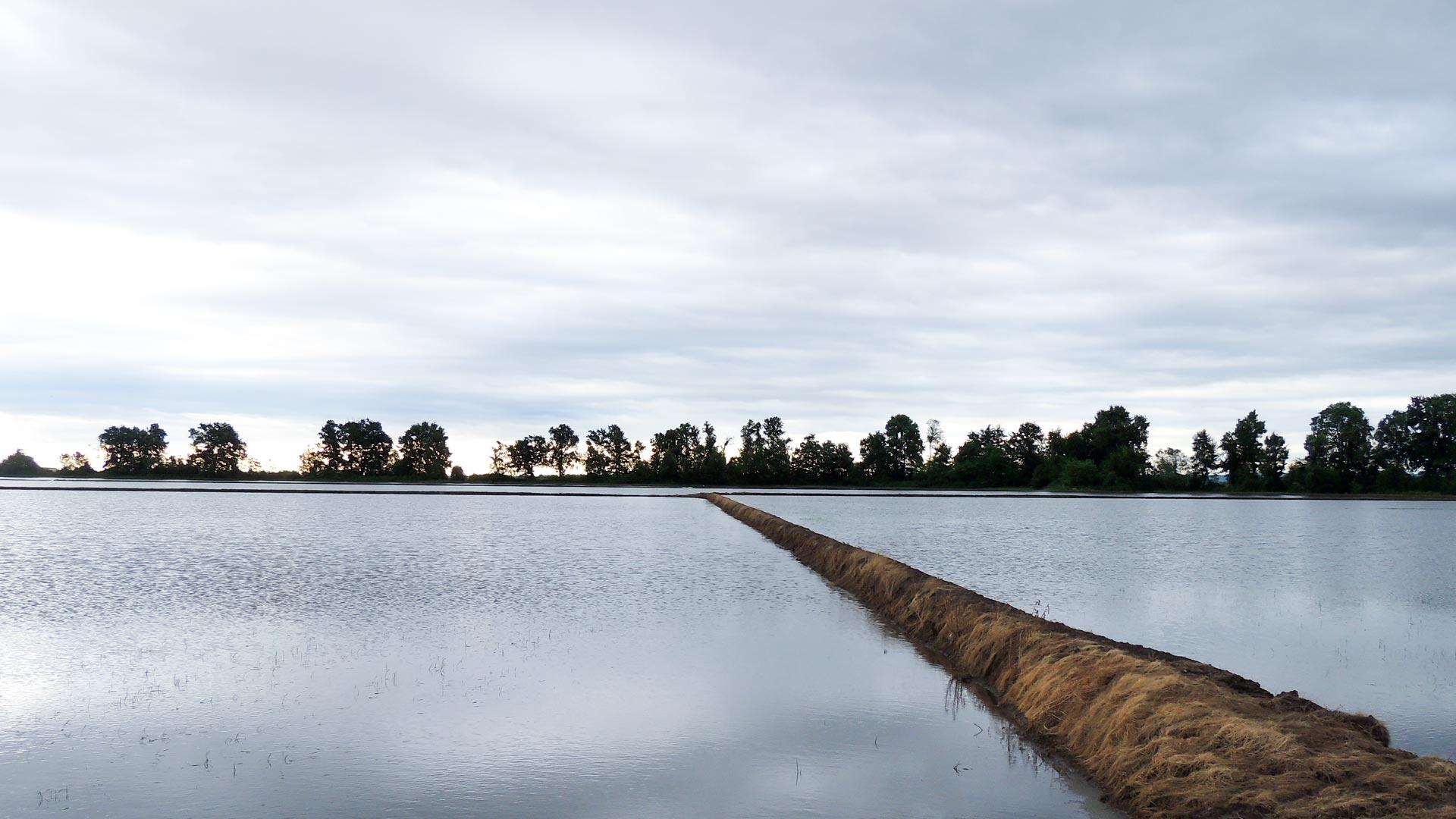 Azienda-Agricola-Lodigana-Riseria-Ronsecco-Vercelli-03