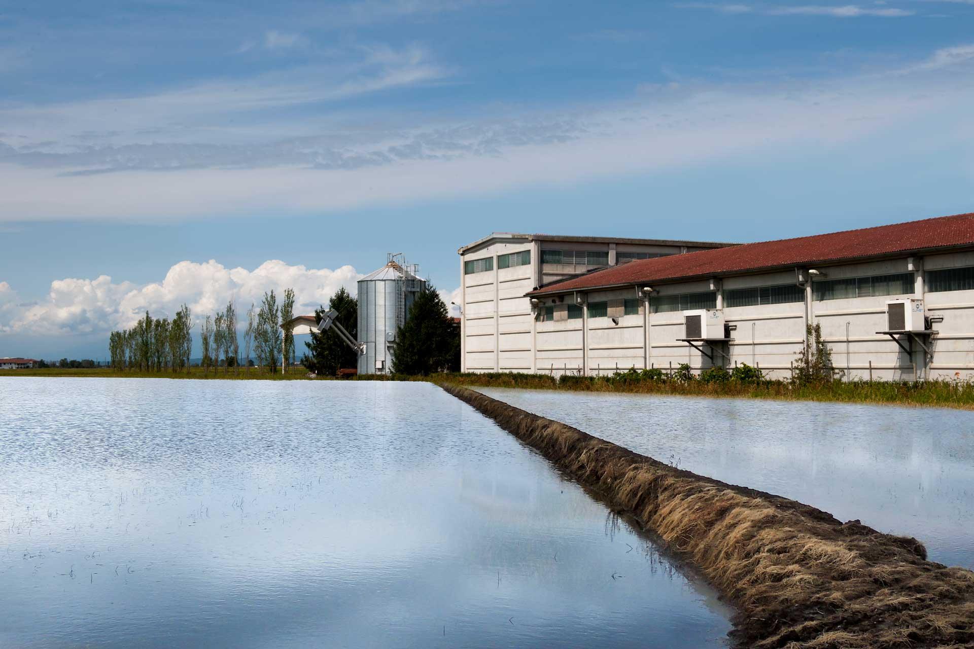 agricola-lodigiana-nel-cuore-del-riso-azienda-agricola-riseria-ronsecco-vercelli-risaia